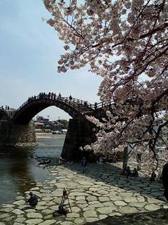 錦帯橋と桜