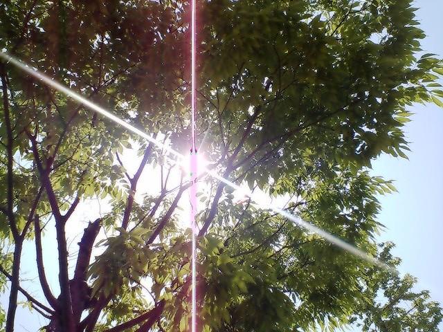 若葉と日光