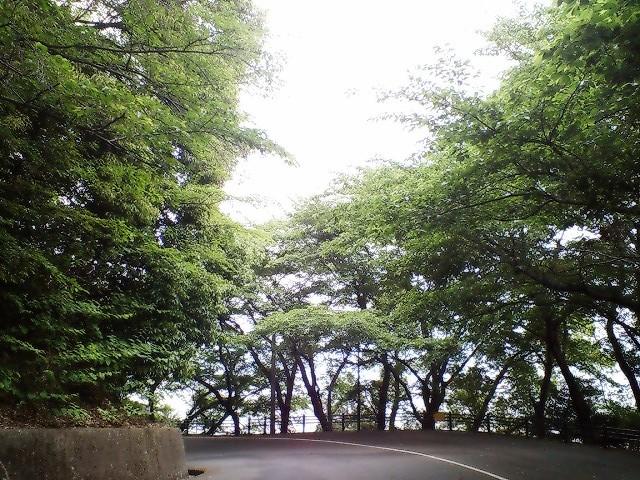 黄金山登山道